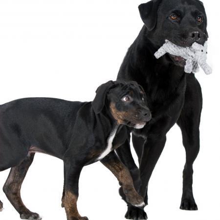 Elbhunde Dresden Laboni Hundespielzeug Elton Elefant Hunde
