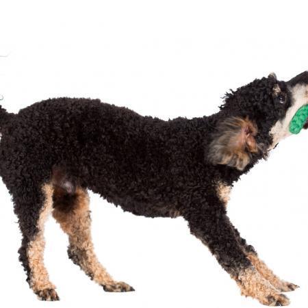 Elbhunde Dresden Laboni Hundespielzeug Kalli Krokodil Hund