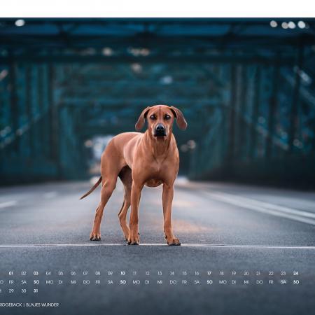 Elbhunde Dresden Kalender 2021 Januar
