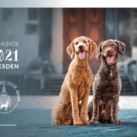 Elbhunde Dresden Kalender 2021 Titelbild
