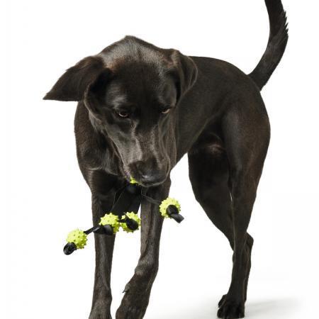 Elbhunde Dresden Hunter Hundespielzeug Tadley Hund