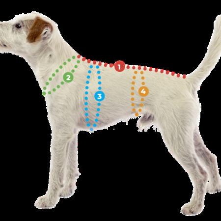 Elbhunde Dresden Pomppa Masshund