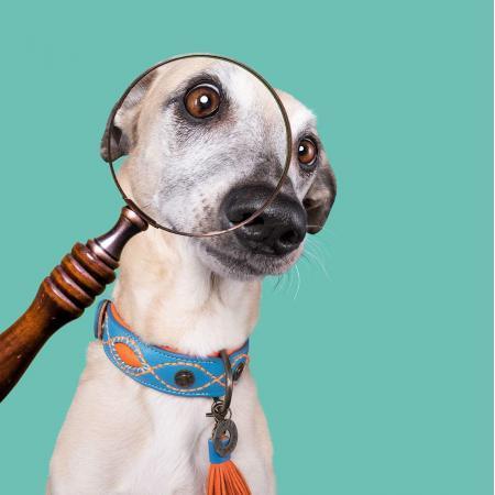 Elbhunde Dresden DWAM Lederhalsband Jones Hund