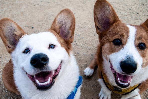 Header Blog Hunde (Halter) Knigge
