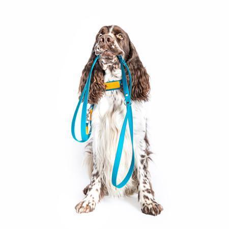Elbhunde Hund mit Leine im Maul bereit für Gassi