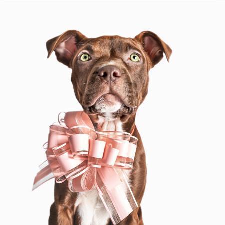Elbhunde Hund mit Schleife