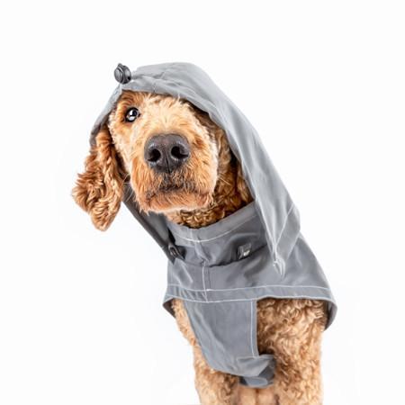 Elbhunde Hund Maya mit Hundemantel Regenmantel an