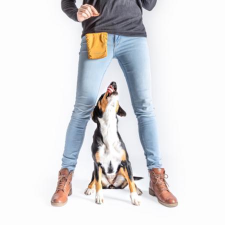 Elbhunde Hund mit Hundehalter mit Leckerli