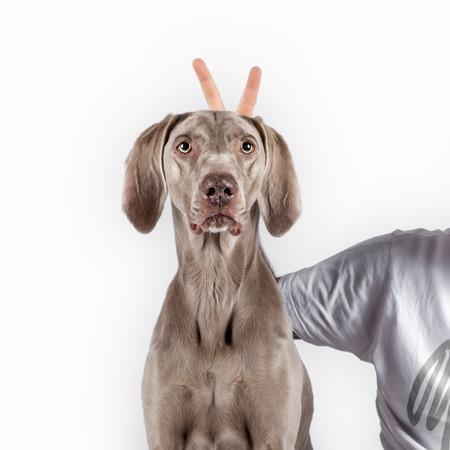 Elbhunde Hund mit Hundehalter gespannt auf neue Produkte