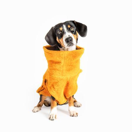 Elbhunde Hund in Hundebademantel Senfgelb