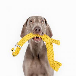 Elbhunde Hund mit Greta Giraffe im Maul