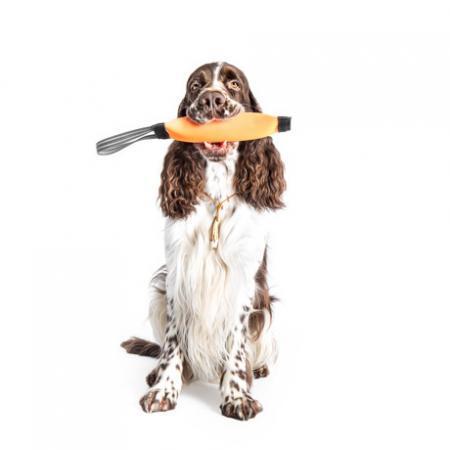 Elbhunde Hund Training Apportieren Spielzeug