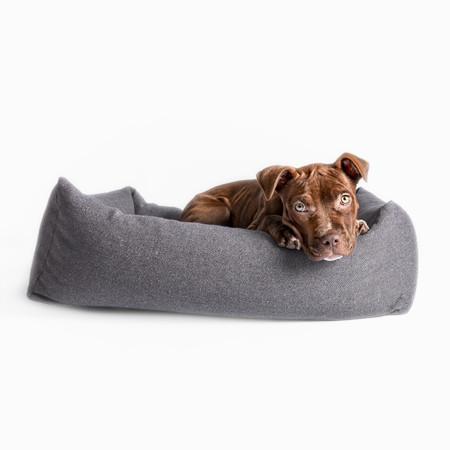 Elbhunde Hund im Hundebett