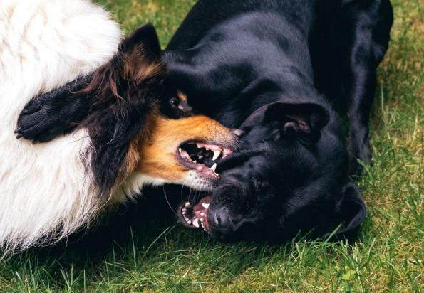 Elbhunde Blog Kommunikation Hunde