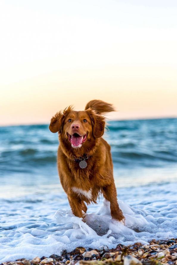 Elbhunde Blog Missverständnis Auslastung Hund am Meer