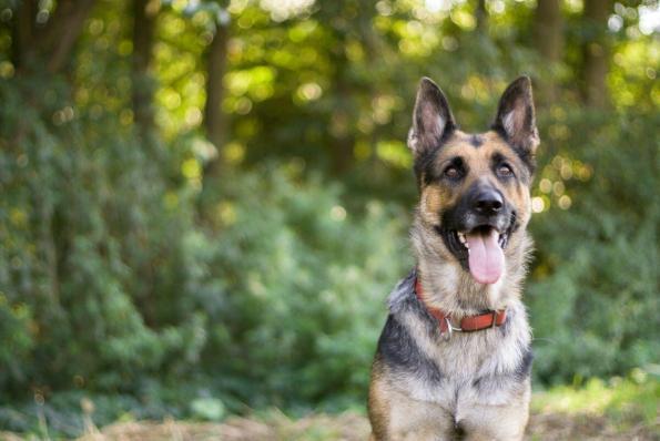 Elbhunde Hundeblog richtiger Trainer
