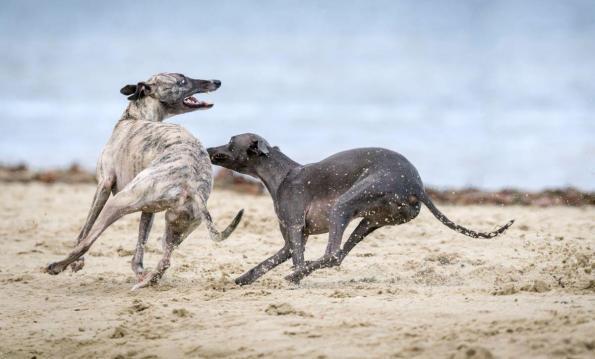 Elbhunde Dresden DogWorker Hundesozialkontakte